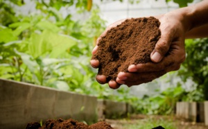 3 local sustainable initiatives worth sharing