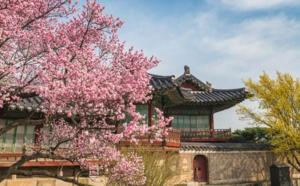 A Cherry Blossom Getaway: Japan vs South Korea