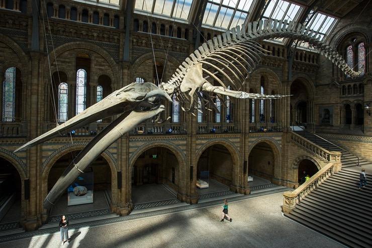 Art et histoire à votre porte : visitez les plus beaux musées du monde sans bouger de chez vous