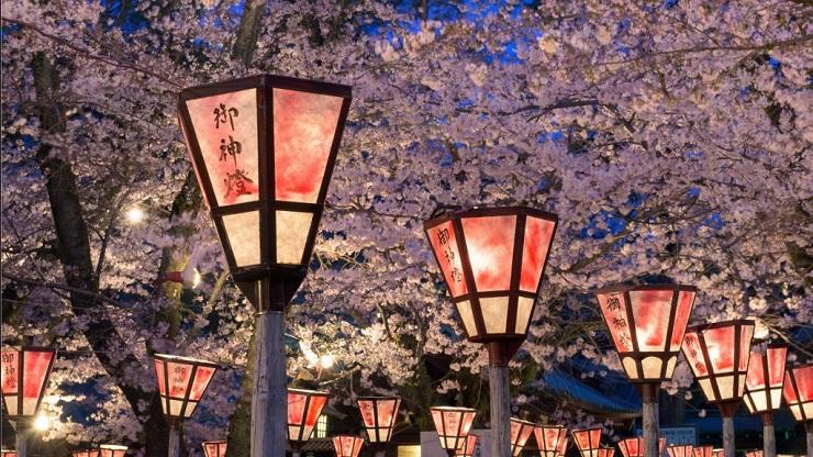 Voir les cerisiers en fleurs : Japon ou Corée du Sud ?