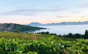 Et si le vin Californien était la boisson de l'été ?