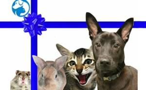 Adopter un compagnon de vie à la SPCA